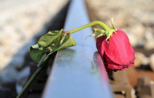 しおれたバラ